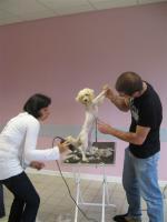 Bac Professionnel élevage canin et félin